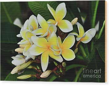 Wood Print featuring the photograph Yellow Plumeria By Kaye Menner by Kaye Menner