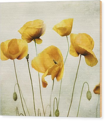 Yellow Poppies - Square Version Wood Print