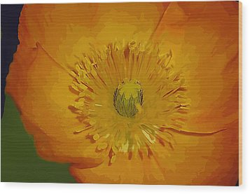 Wood Print featuring the photograph Yellow Poppy by Donna Bentley