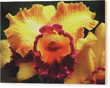Wood Print featuring the photograph Yellow-purple Orchid by Anthony Jones