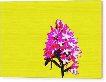 Yellow Pyramid Orchid Wood Print