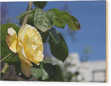 Yellow Rose 2 Wood Print by Remegio Onia