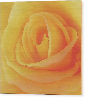 Yellow Rose 4788 Wood Print by Michael Peychich