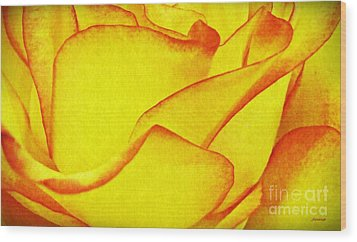 Yellow Rose Abstract Wood Print