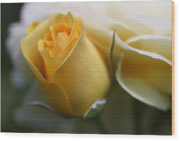 Yellow Rose Bud Flower Wood Print by Jennie Marie Schell