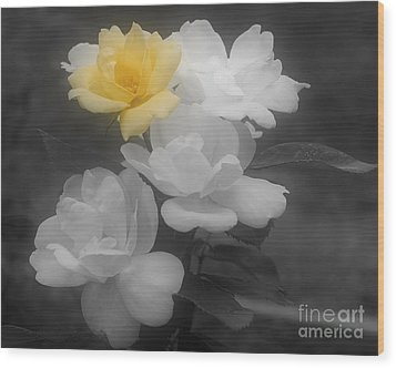 Yellow Rose Cluster Partial Color Wood Print