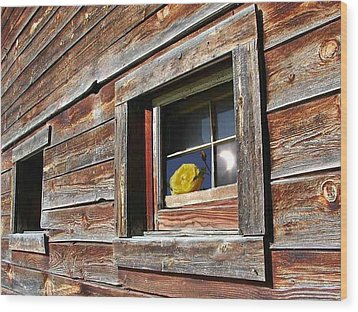 Yellow Rose Eclipse Wood Print by Tim Allen