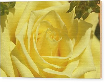 Yellow Rose Wood Print by Heidi Poulin