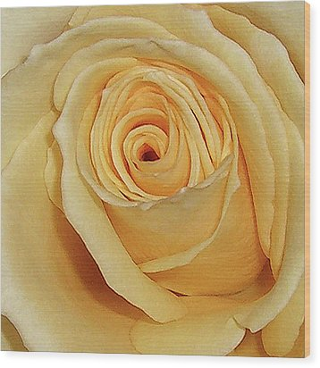 Yellow Rose Wood Print by Merton Allen