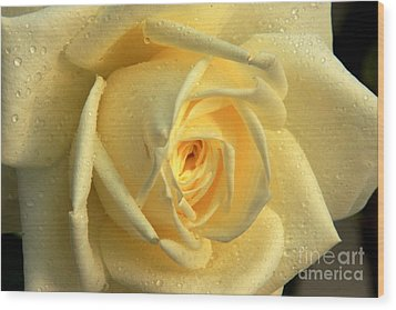 Wood Print featuring the photograph Yellow Rose by Nicola Fiscarelli