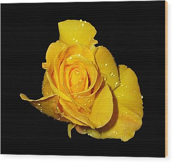 Yellow Rose With Dew Drops Wood Print by Patricia Barmatz