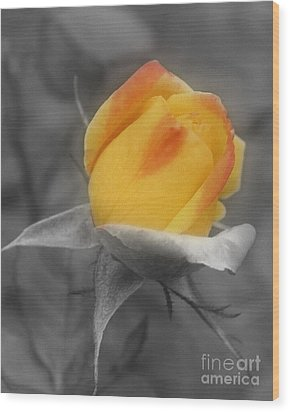 Yellow Rosebud Partial Color Wood Print