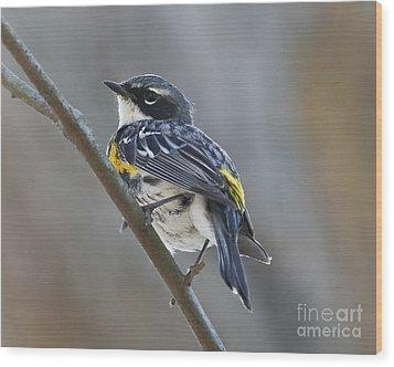 Yellow-rumped Warbler Portrait Wood Print by Anita Oakley