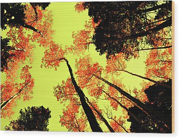 Wood Print featuring the photograph Yellow Sky, Burning Leaves by Kevin Munro