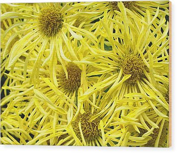 Yellow Spider Mums Wood Print by Richard Singleton