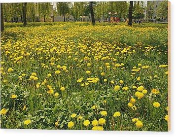 Yellow Spring Carpet Wood Print by Henryk Gorecki