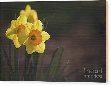Yellow Spring Daffodils Wood Print by Andrea Silies