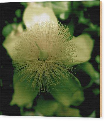 Yellow Star Wood Print by Tina Valvano