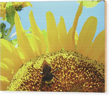 Yellow Sunflower Art Prints Bumble Bee Baslee Troutman Wood Print by Baslee Troutman