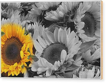 Yellow Sunflower On Black And White Wood Print by Dora Sofia Caputo Photographic Art and Design