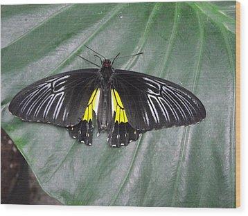 Golden Birdwing Wood Print