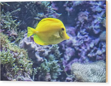 Yellow Tang Wood Print