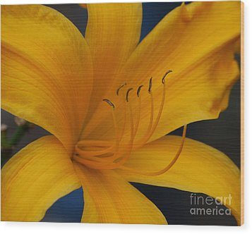 Yellow Tiger Lilly Wood Print