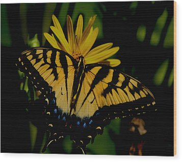 Yellow Tiger Swallowtail Butterflly Wood Print by Martin Morehead