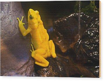 Yellow Tropical Frog Wood Print by Douglas Barnett