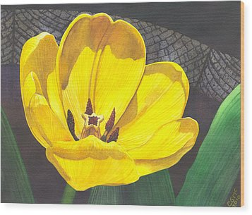 Yellow Tulip Wood Print by Catherine G McElroy
