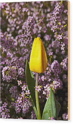 Yellow Tulip In The Garden Wood Print by Garry Gay
