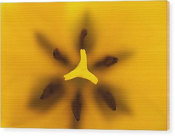 Yellow Tulip Wood Print by Sebastian Musial