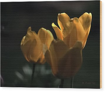 Wood Print featuring the photograph Yellow Tulip Spotlight by Michael Flood