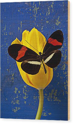 Yellow Tulip With Orange And Black Butterfly Wood Print by Garry Gay
