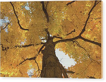 Yellow Up Wood Print by Steve Stuller