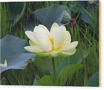 Wood Print featuring the photograph Yellow Water Lily by Farol Tomson