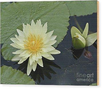 Yellow Water Lily With Bud Nymphaea Wood Print by Heiko Koehrer-Wagner