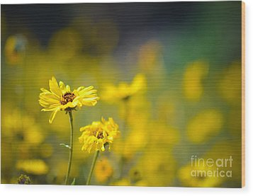 Wood Print featuring the photograph Yellow Wild Flowers by Kelly Wade