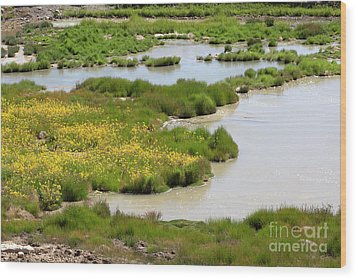 Yellow Wildflowers At Mud Volcano Area In Yellowstone National Park Wood Print by Louise Heusinkveld