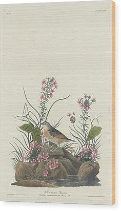 Yellow-winged Sparrow Wood Print by Anton Oreshkin