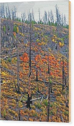 Yellowstone - Forest Burn 1 Wood Print by Steve Ohlsen