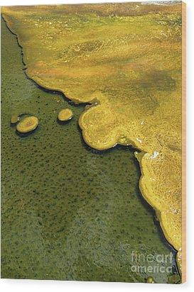 Yellowstone Art. Yellow And Green Wood Print by Ausra Huntington nee Paulauskaite