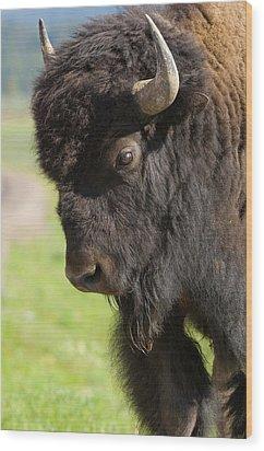 Yellowstone Bison Portrait Wood Print by Sandra Bronstein