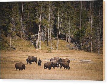 Yellowstone Bison Wood Print by Steve Gadomski