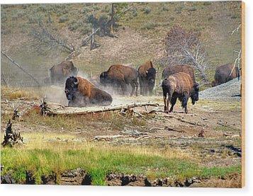 Yellowstone Buffalo- Fine Art Photograph Wood Print by Greg Sigrist