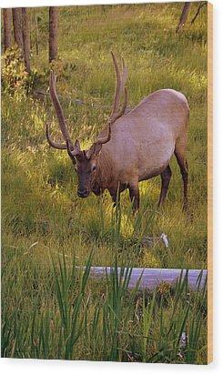 Yellowstone Bull Wood Print by Marty Koch