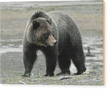Wood Print featuring the photograph Yellowstone Grizzly A Pondering by Bruce Gourley