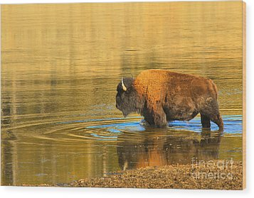 Wood Print featuring the photograph Yellowstone Solo Swimmer by Adam Jewell