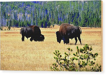 Yellowstonepark Wood Print by Aron Chervin