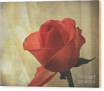 Wood Print featuring the photograph Yesterday's Rose by Jacqi Elmslie